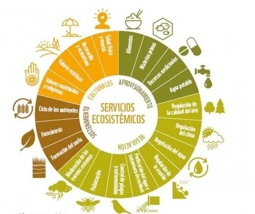 Los servicios ecosistémicos que conforman el capital natural